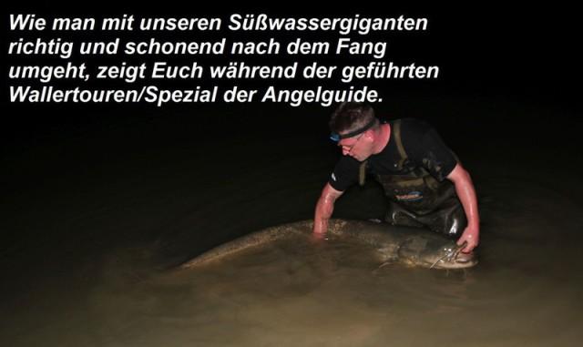 Wallerangeln in Deutschland erlebt man bei ProOutdoor Fishing direkt an der Havel