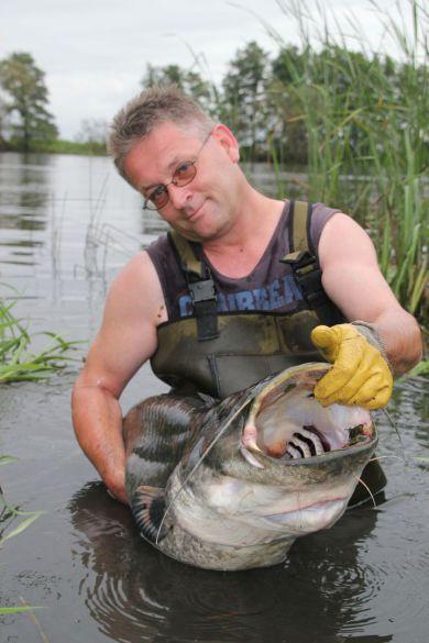 Fischbestand Havel